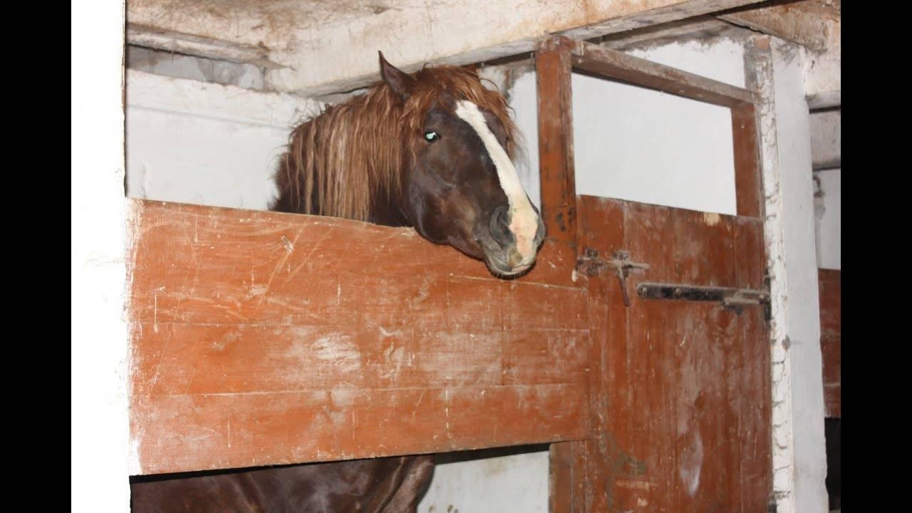 Колики у лошади что делать