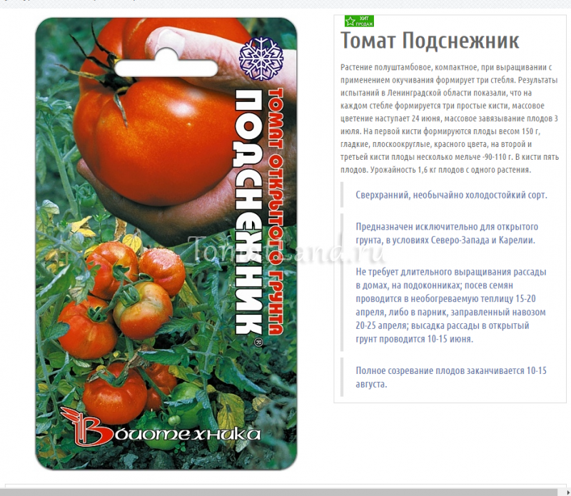 Характеристика и описание сорта томата Подснежник, его урожайность