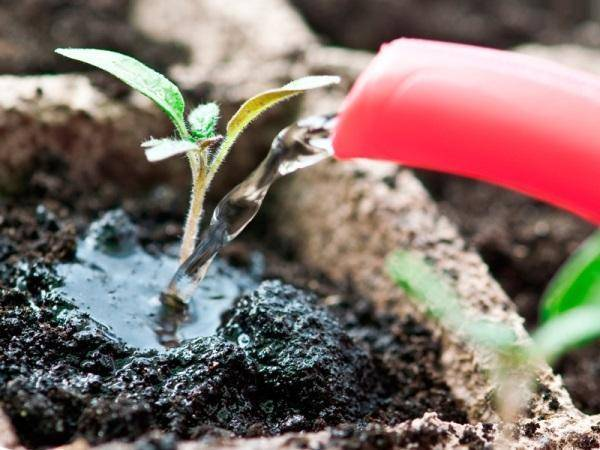 Залог богатого урожая — использование золы для подкормки рассады томатов в домашних условиях