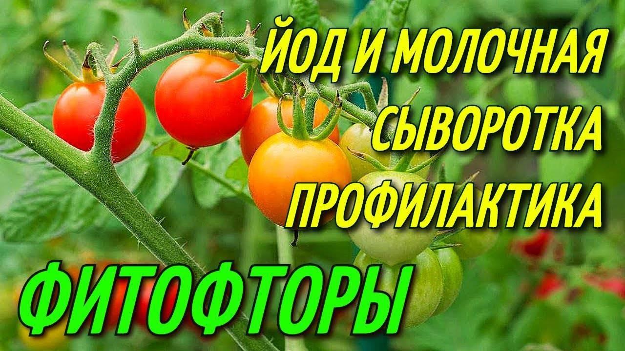 Как правильно подкормить помидоры йодом?