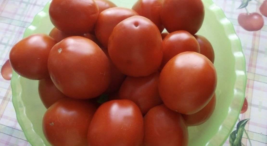 Томат земляк: описание сорта и 9 шагов выращивания