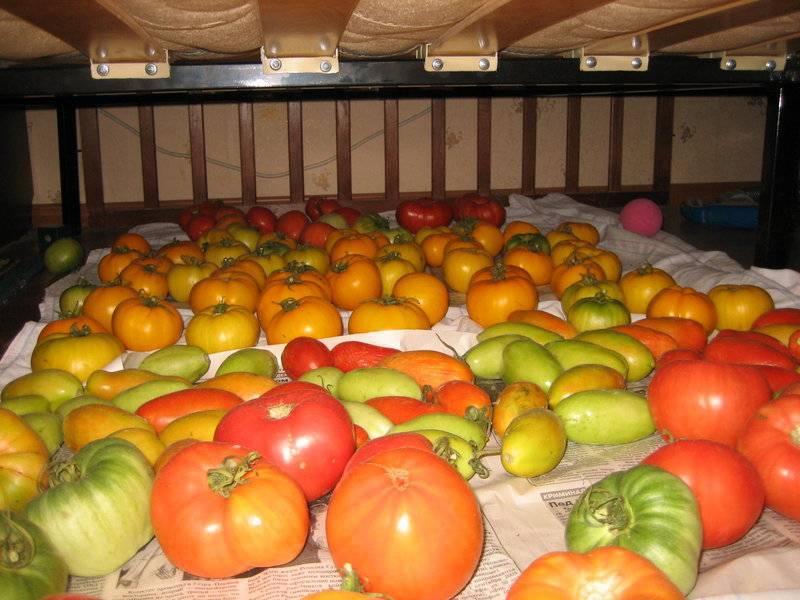 Томат озалтин: характеристика и описание сорта, отзывы, урожайность