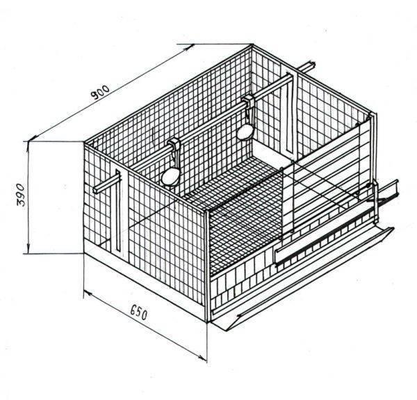 Клетки для цыплят своими руками: размеры, чертежи