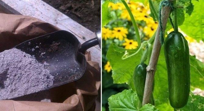 Как получить урожай огурцов на подоконнике или балконе зимой?