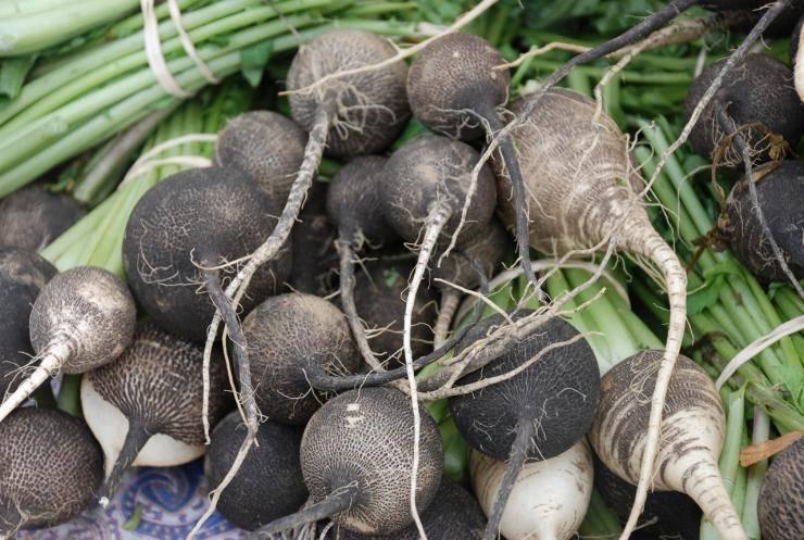 Оптимальные сроки посадки и агротехника черной редьки