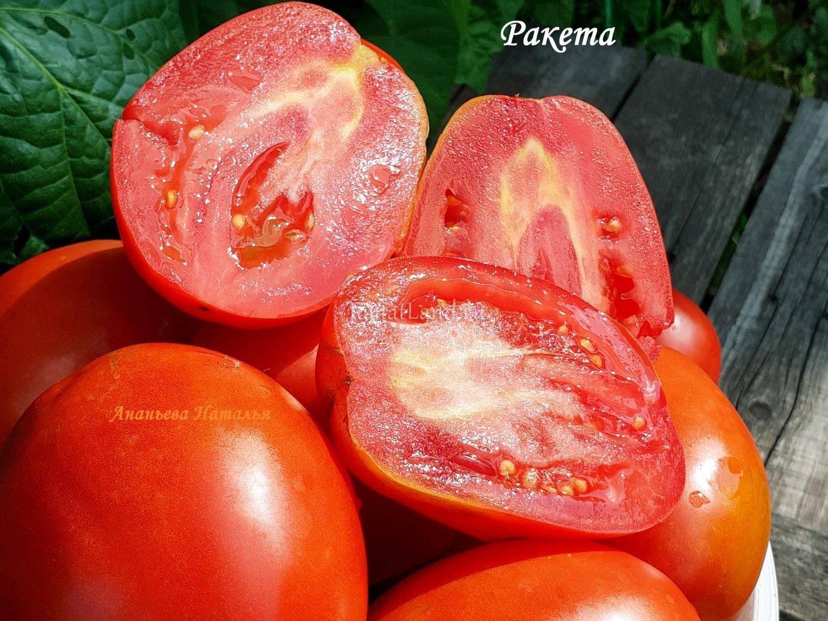 Объективные оценки сорта томата «ракета»: урожайность, вкус, сроки созревания