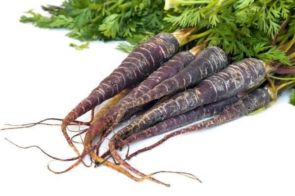 Черная морковка