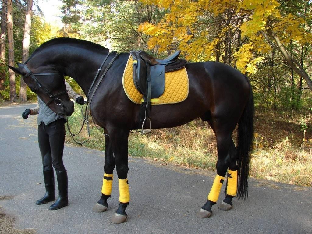 Верховые породы лошадей