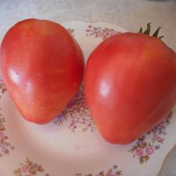 Томат боярыня f1: характеристика и описание сорта, отзывы садоводов с фото
