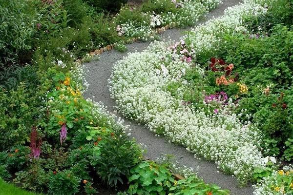 Цветы для клумбы: советы по выбору и особенности посадки разных видов растений для клумбы (145 фото и видео)