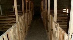 Сооружение качественного свинарника для 100 голов хрюшек