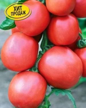 Устойчивый и неприхотливый сорт томата «столыпин»: описание, характеристика, посев на рассаду, подкормка, урожайность, фото, видео и самые распространенные болезни томатов