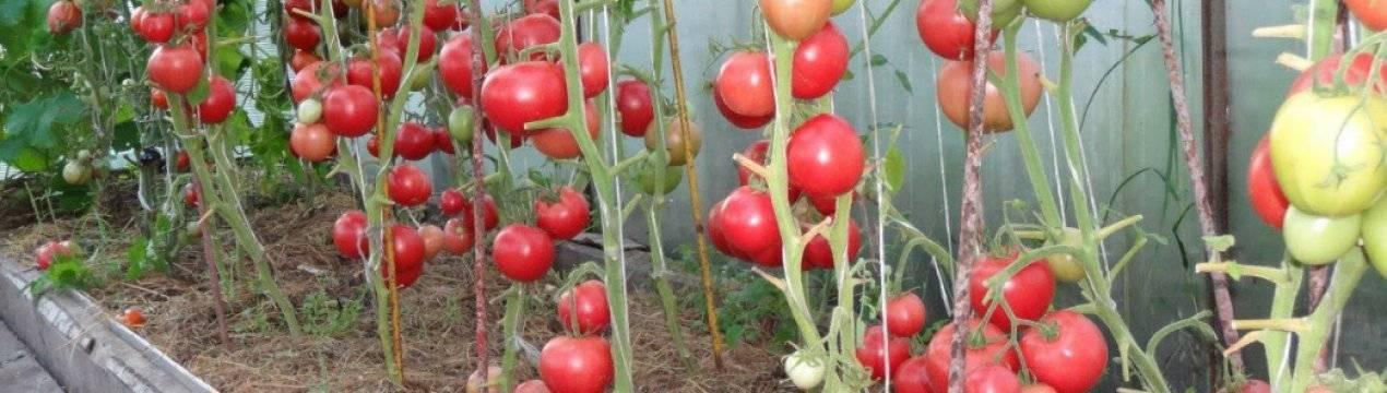 Розовые и малиновые помидоры: список 25 лучших сортов, их описания и характеристики