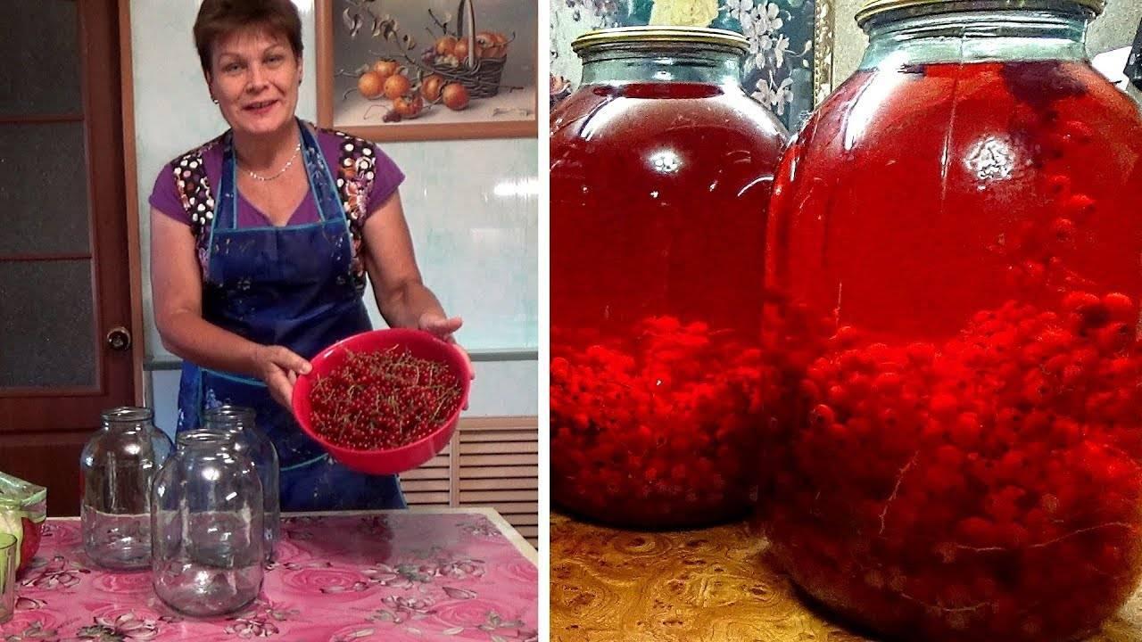 Простые и вкусные рецепты компота из красной смородины