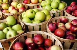 Особенности летнего сорта яблони серебряное копытце