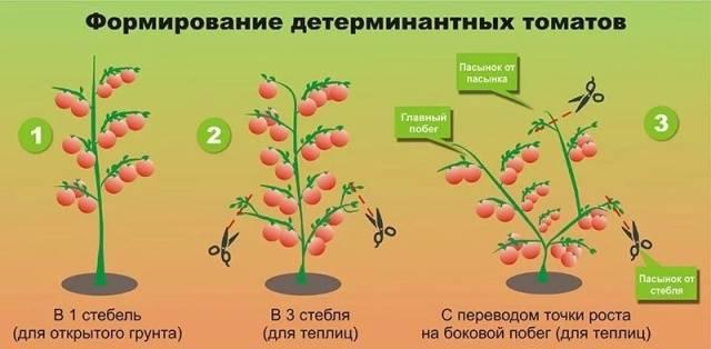 Как правильно формировать помидоры