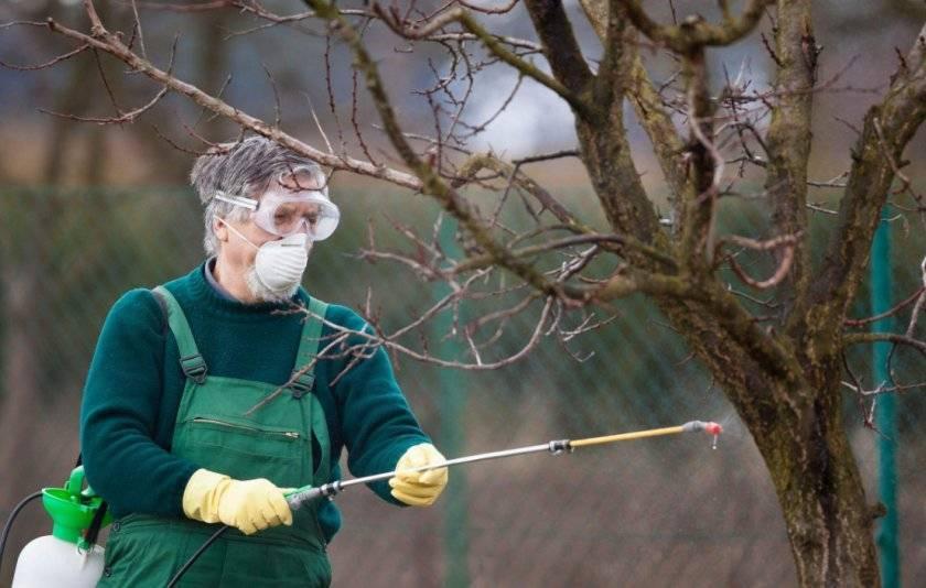 Инструкция, как правильно заделать дупло в яблоне и чем лучше его замазать