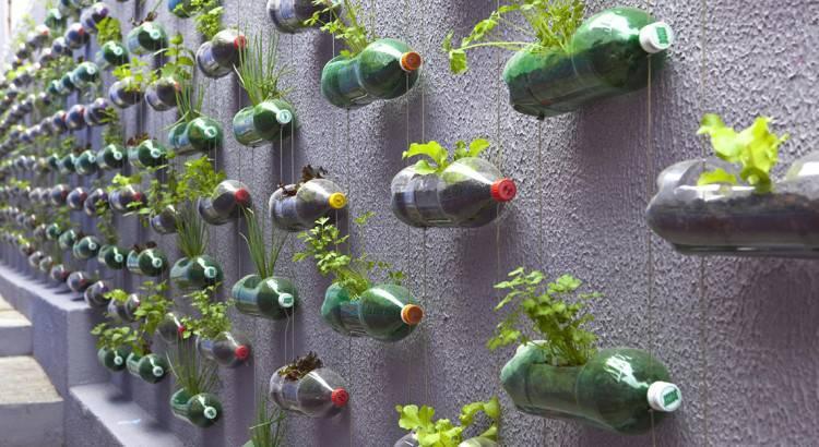 Как правильно посадить и вырастить огурцы в пятилитровых пластиковых бутылках?