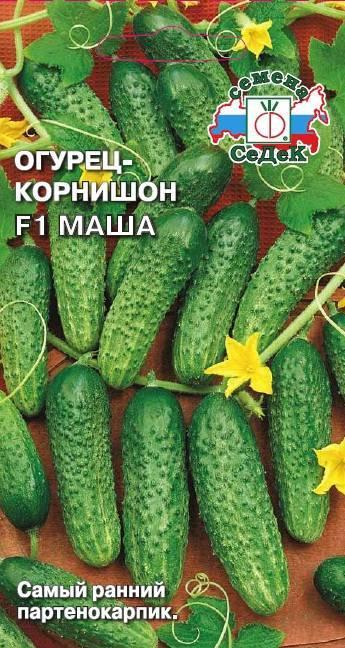Самые высокоурожайные сорта огурцов для открытого грунта
