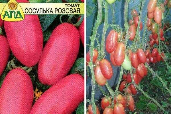 Томат сосулька красная описание сорта характеристики и выращивание с фото