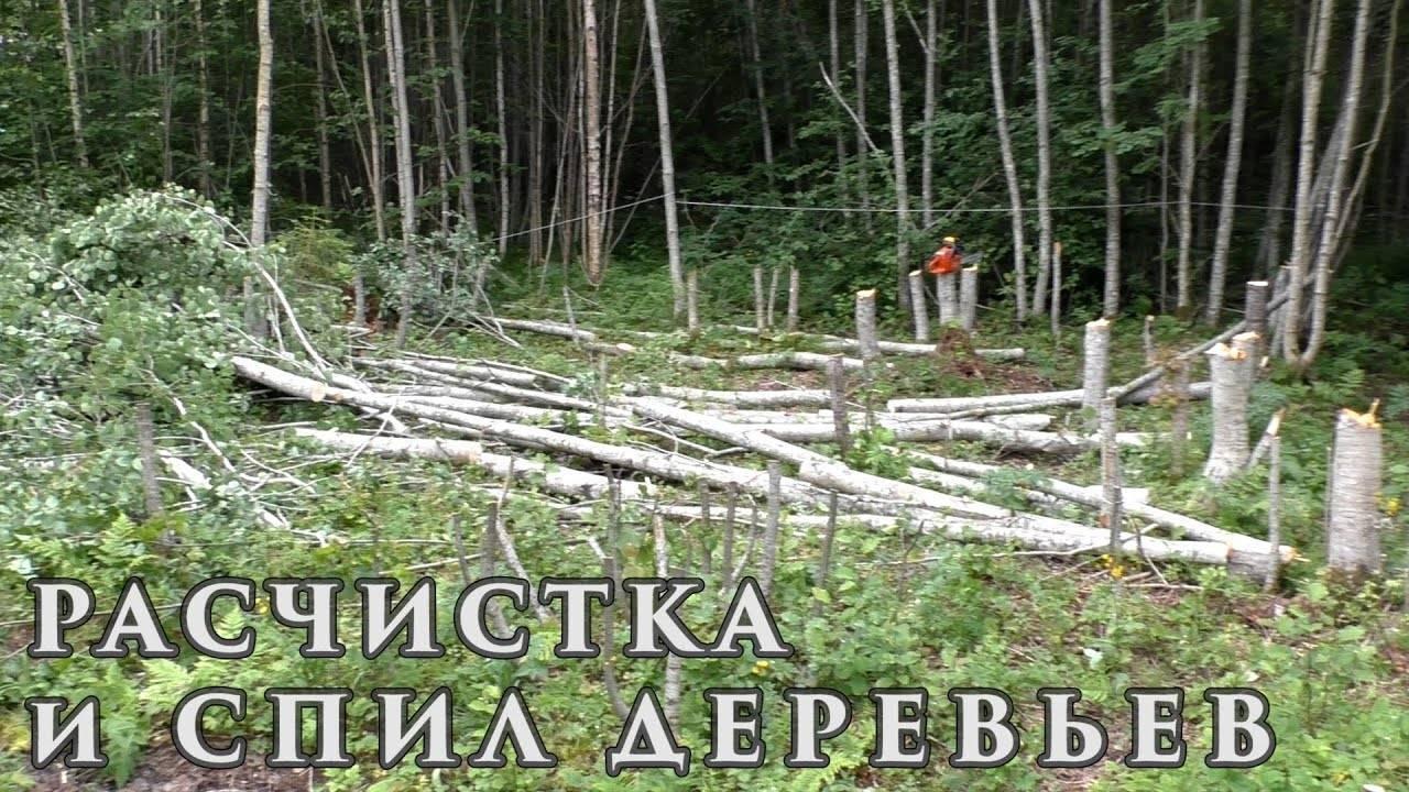 Лучшие методы, как на участке избавиться от поросли деревьев