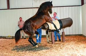 Сколько месяцев ходит беременная лошадь и как проходят роды