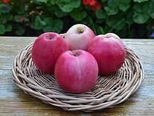 Скороплодная, высокоурожайная и неприхотливая — яблоня алое раннее!