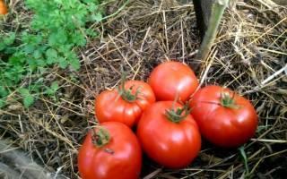 Морозостойкий сорт томата «подснежник» для выращивания в зонах неустойчивого земледелия: описание, характеристика, посев на рассаду, подкормка, урожайность, фото, видео и самые распространенные болезни томатов