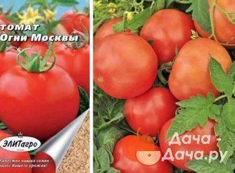 Описание сорта томата Огородный колдун, его характеристика и урожайность