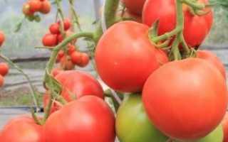 Сорт томата «алтайский шедевр»: описание, характеристика, посев на рассаду, подкормка, урожайность, фото, видео и самые распространенные болезни томатов