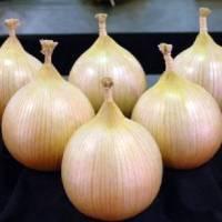 Популярный лук эксибишен: как из семян получить большой урожай?