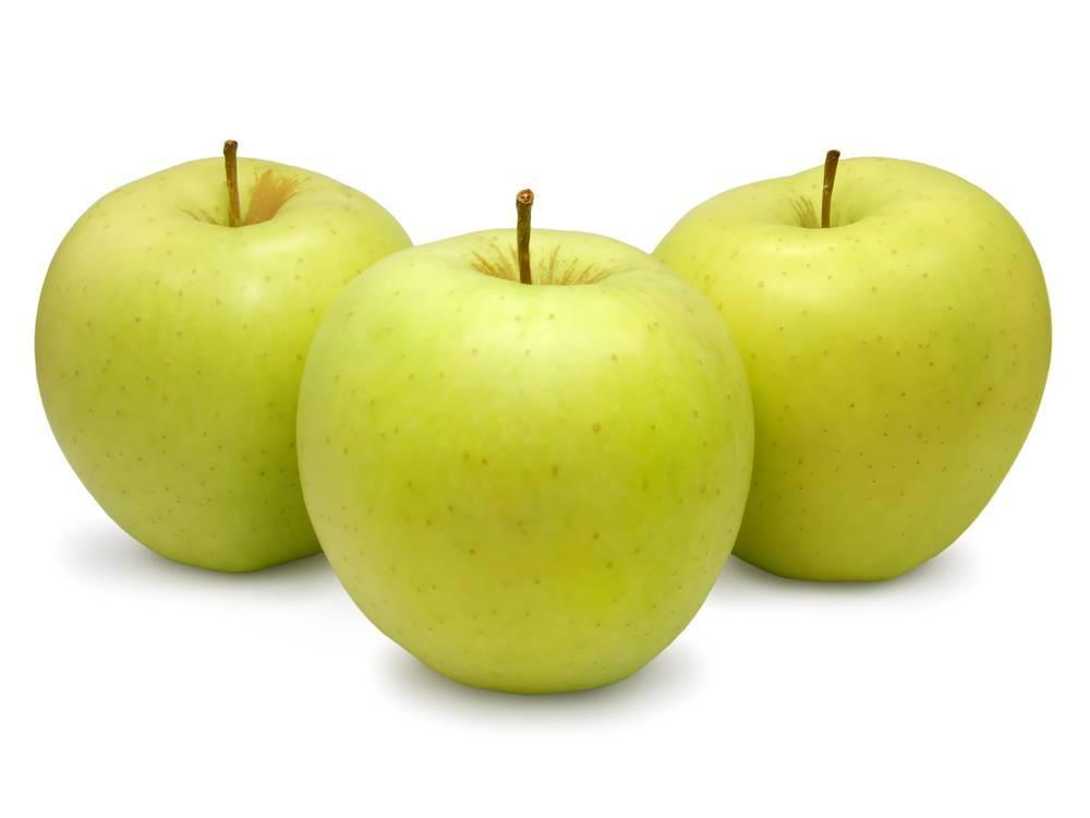 Обзор лучших сортов яблонь с фото и описанием