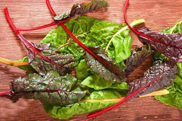 Листовая свекла: ценная зеленная культура и декоративное растение