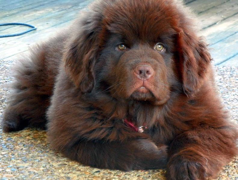 Клички и имена для собак девочек: легкие и красивые