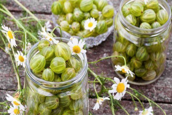 Варенье из крыжовника – 5 простых и вкусных рецептов с фото пошагово