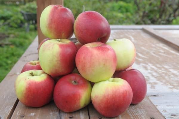 Лучшие сорта яблонь для сибири