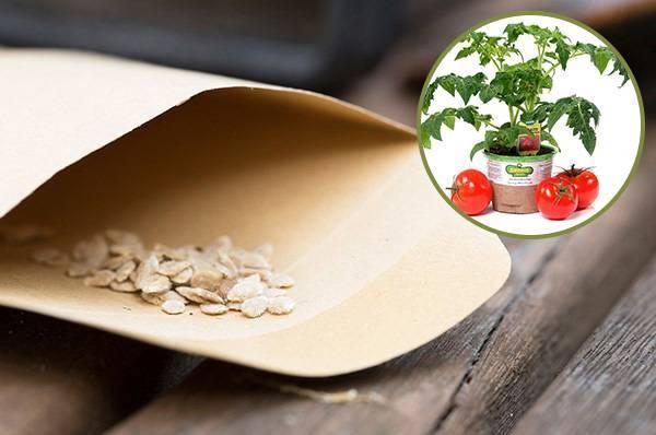 Как подготовить семена томатов к посадке на рассаду?