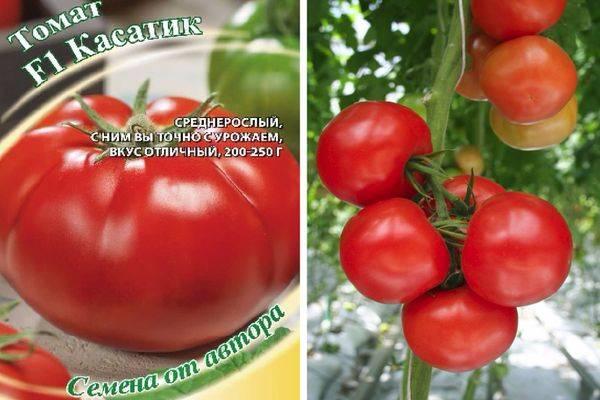 Необычный сорт томата дюймовочка