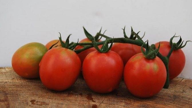 Универсальный сорт томата «сливка медовая»: описание, характеристика, посев на рассаду, подкормка, урожайность, фото, видео и самые распространенные болезни томатов