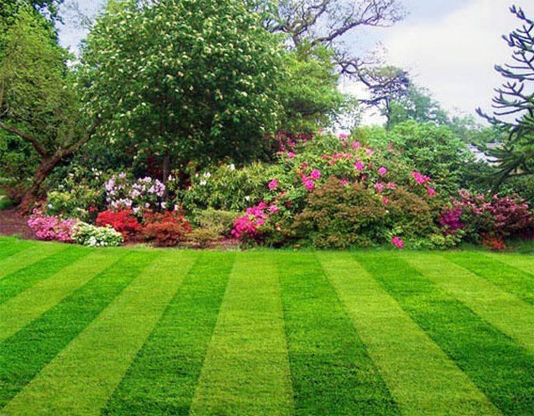 Чем лучше обработать клубнику для избавления от сорняков, описание гербицидов