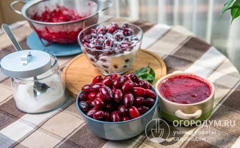 Очень вкусное и необычайно красивое варенье из кизила, рецепты на зиму «пальчики оближешь»