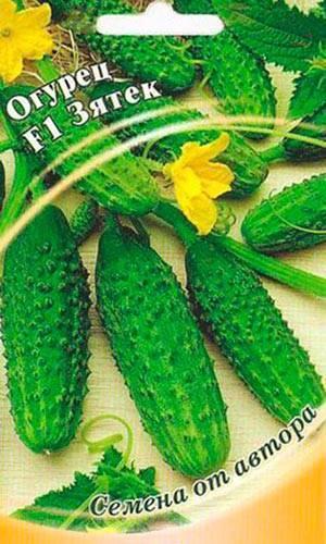 Скороспелые огурцы «зятек f1» с высокой урожайностью и отличной стойкостью к заболеваниям