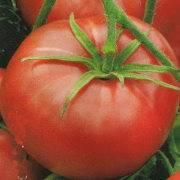 Сахар коричневый — необычный томат. особенности, описание агротехники, отзывы