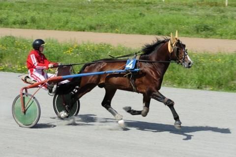 Какая может быть максимальная скорость лошади и от чего она зависит
