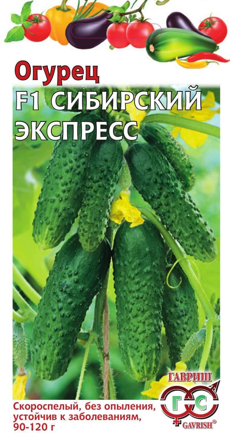 Описание сорта огурца Сибирский экспресс, особенности выращивания и ухода