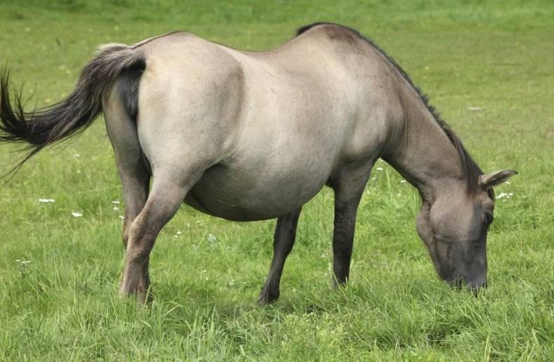 Сколько длится беременность и как принять роды у лошадей