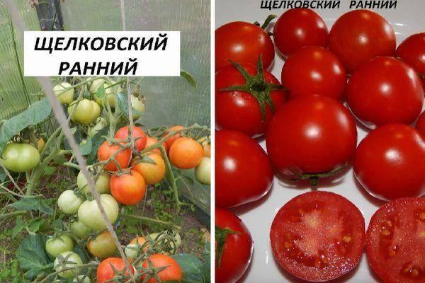 Детерминантный сорт томата универсального назначения «щелковский ранний»: фото, отзывы, описание, характеристика, урожайность