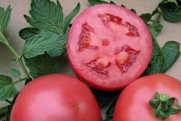 За что все так любят томат «дачник»?