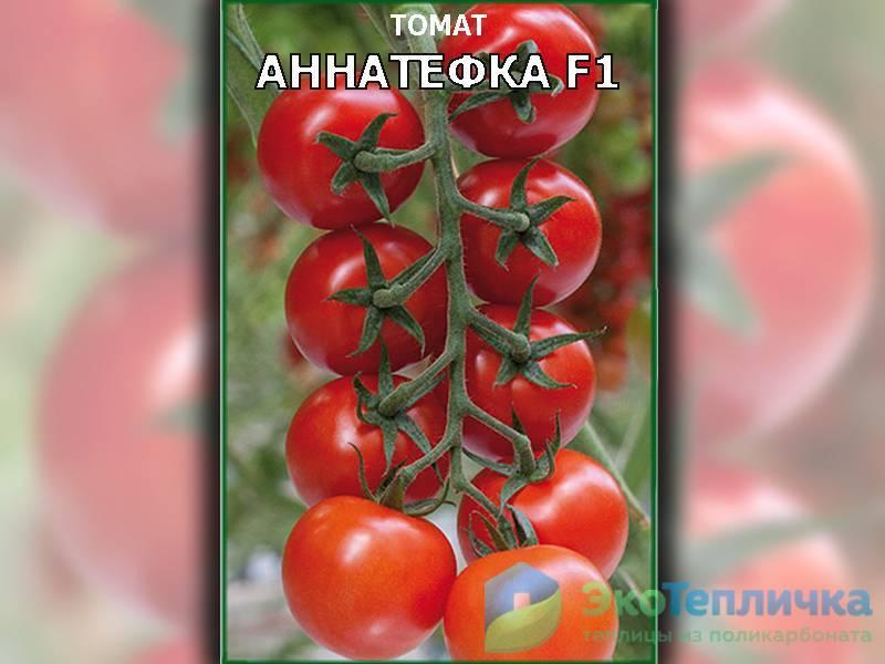 Лучшие сорта томатов для теплиц на 2018-2019 годы