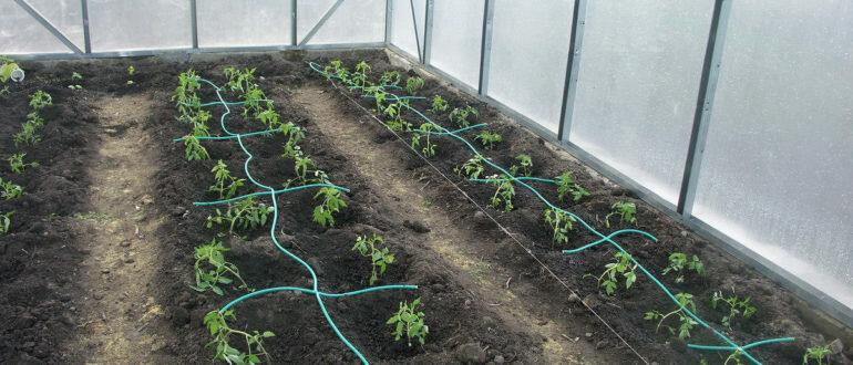 Мульчирование огурцов в открытом грунте, теплицах: советы и инструкции